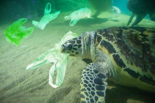 La Contaminación por plástico en el mar afecta a estas especies