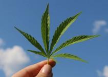 Kaeri Tedla nos habla de marihuana en el Plan Nacional de Desarrollo