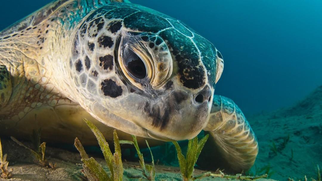 Día Mundial de la Tortuga Marina