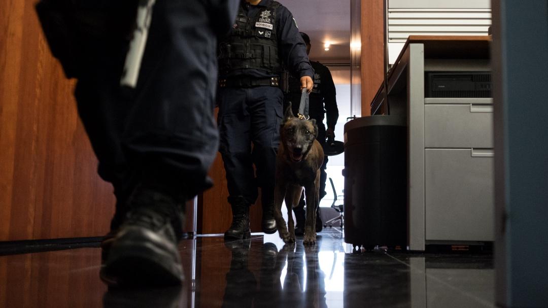 Escuadrón canino reforzará vigilancia en Senado