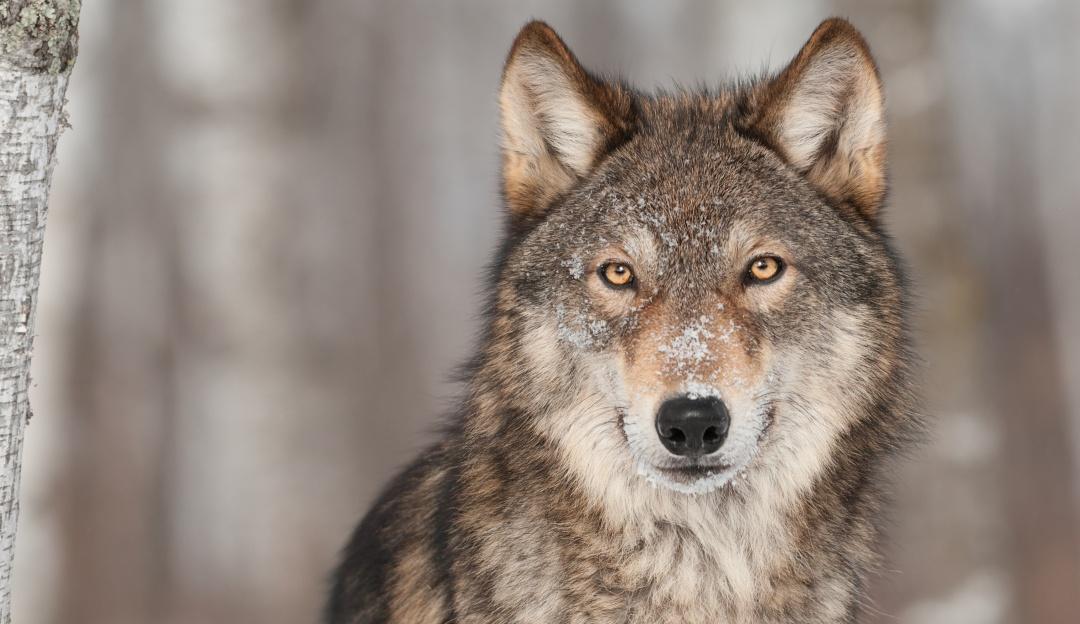 Somos el país con mayor número de especies en peligro de extinción