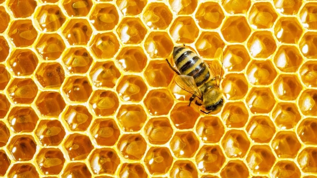 Jalisco líder en producción de miel