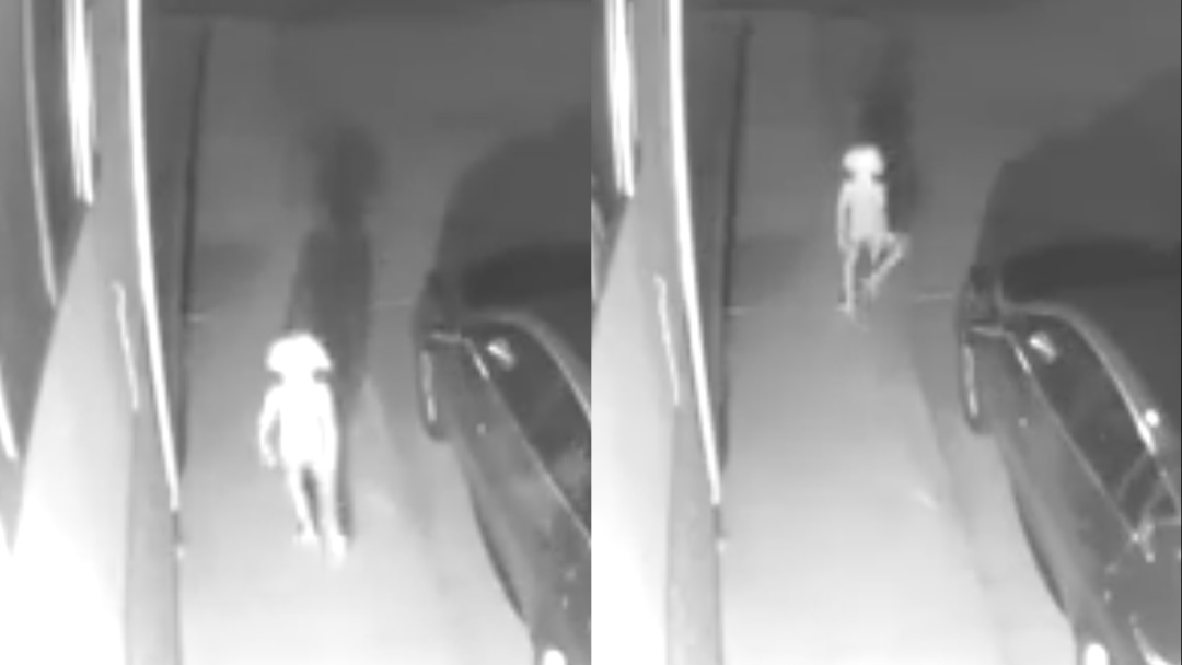 Video viral expone a extraño ser parecido al elfo Dobby de Harry Potter