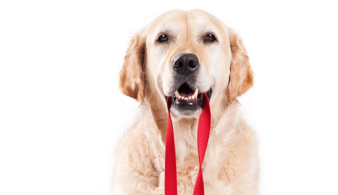 Rompan filas; perro del ejército sorprende en redes sociales