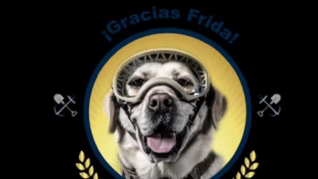 Gracias Frida; se jubila la perrita que apoyó en los rescates del 19S