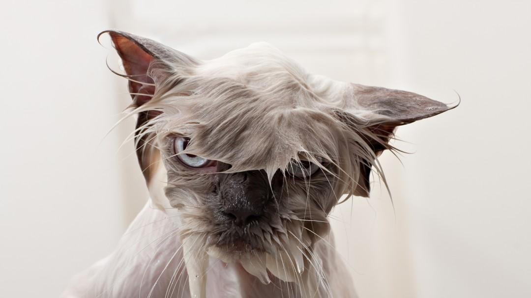 Lavado completo; gatito sobrevive a todo el ciclo de lavado