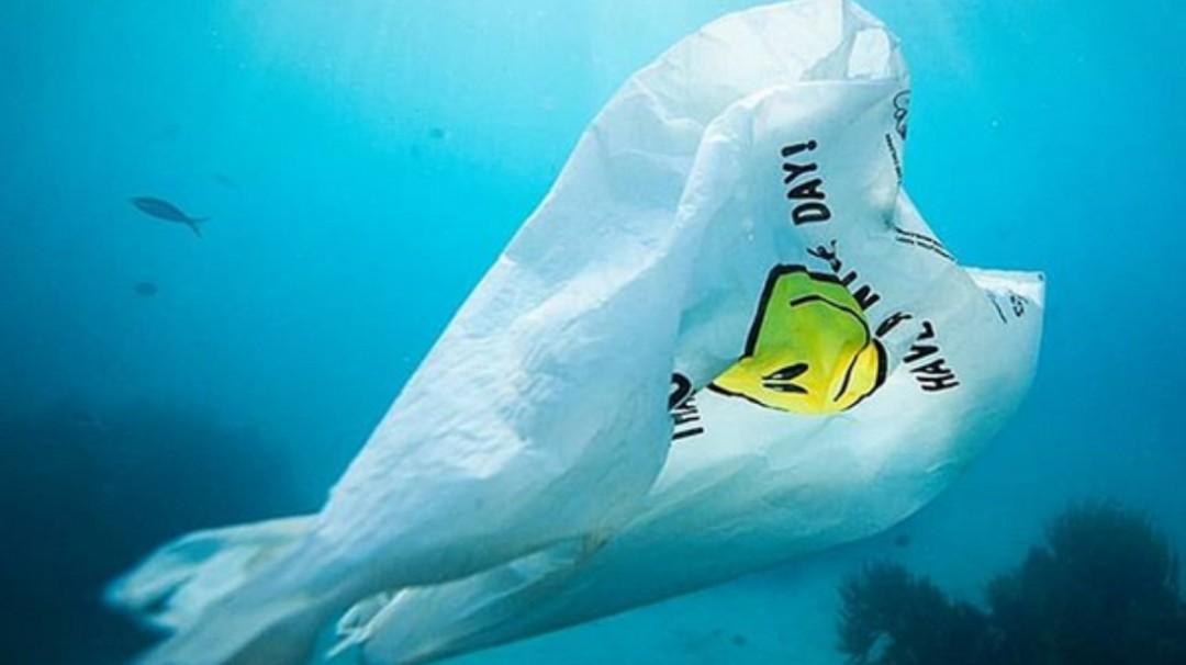 Crean bolsa que en el agua logra transformarse en comida para peces