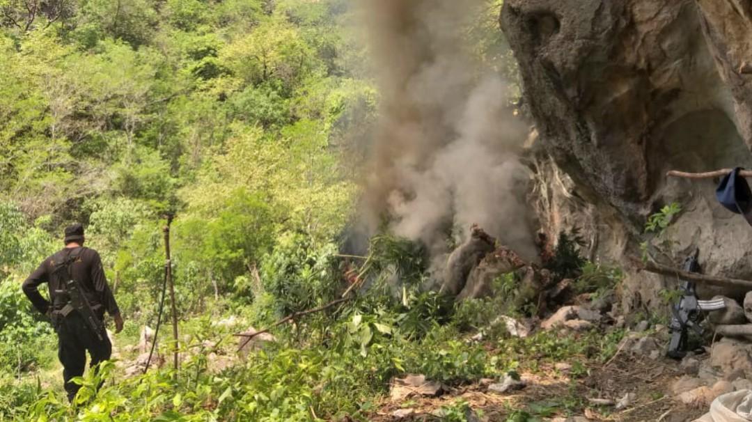 SSPJ incendia 19 mil plantas de marihuana