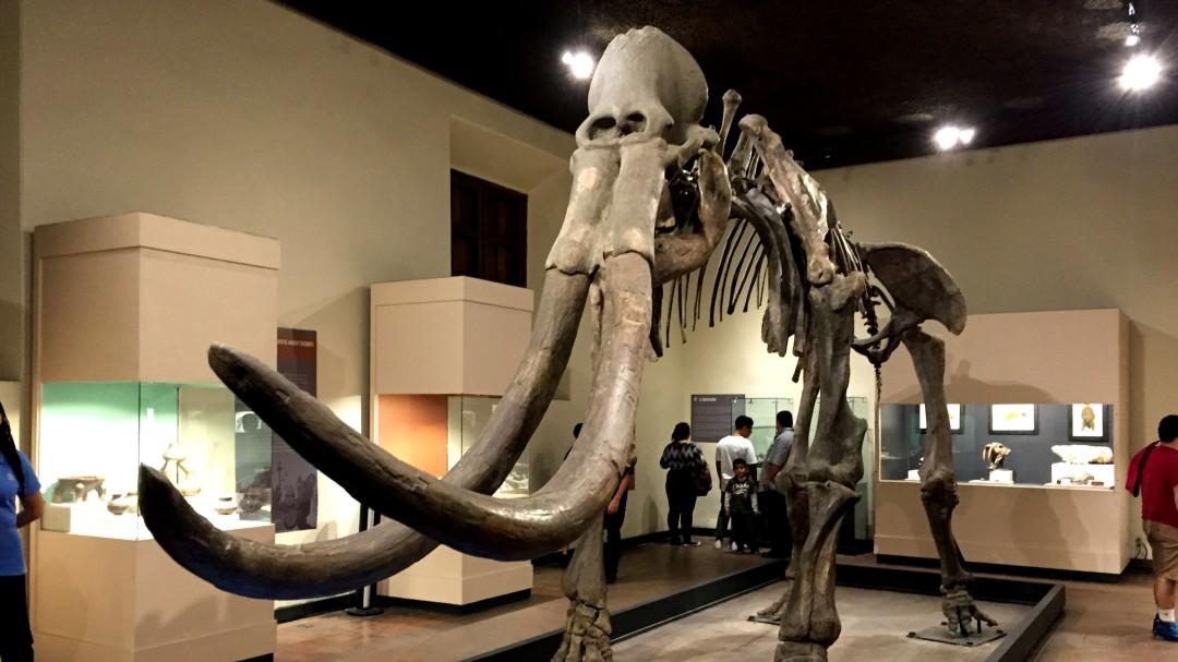 Verano en el museo de Paleontología