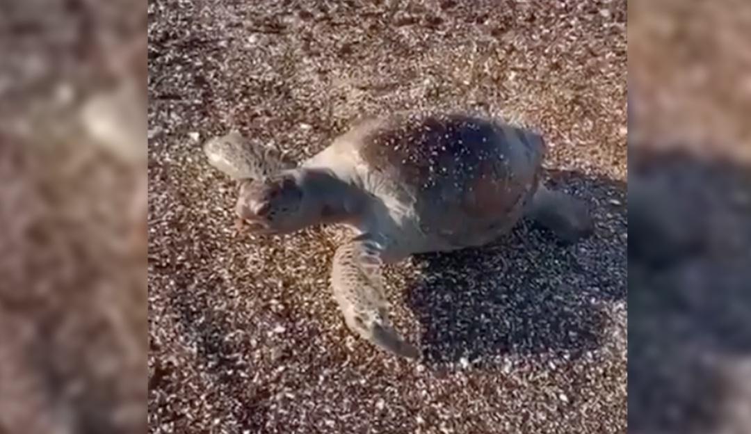 En Mar de Cortés captan especies marinas sin vida tras derrame de ácido