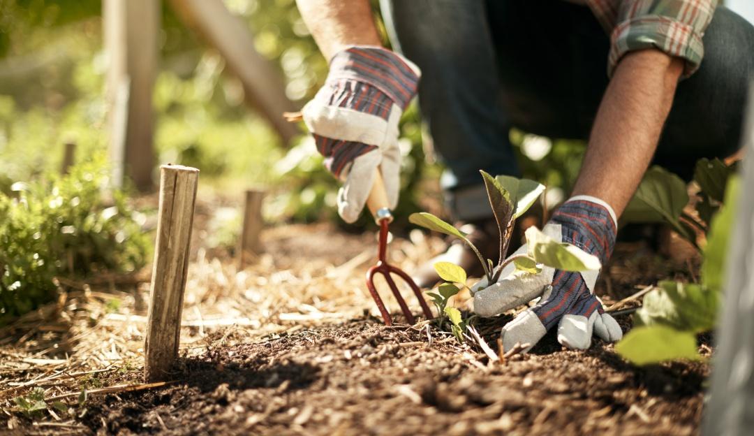 Canadá en busca de jardineros mexicanos; ganarán 29 mil pesos