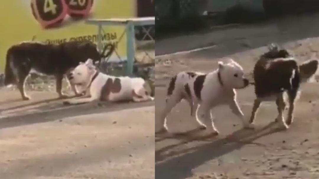 Qué buen corazón; perrito callejero libera a otro y juntos se van de paseo