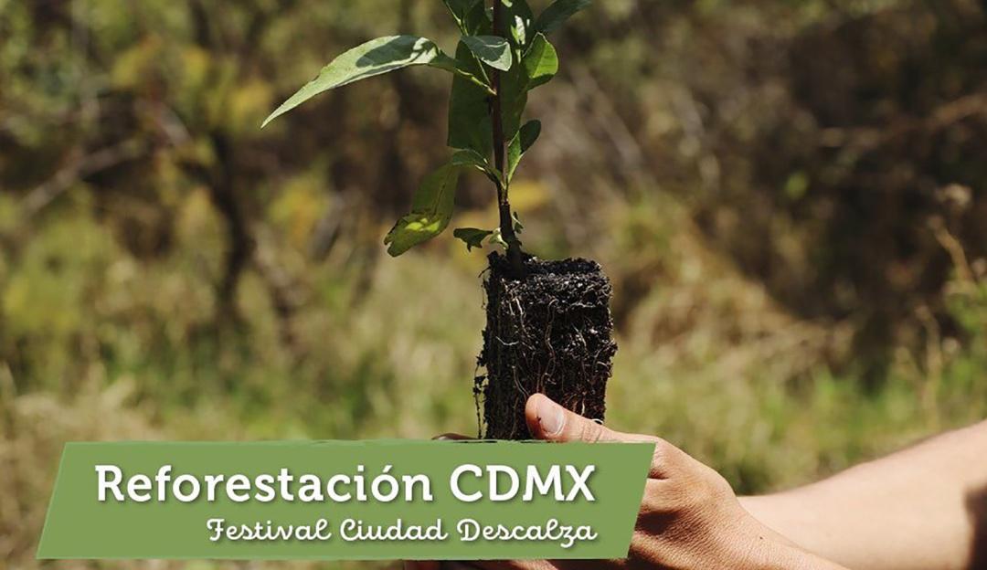 Ciudad Descalza, un evento para reforestar la Ciudad de México