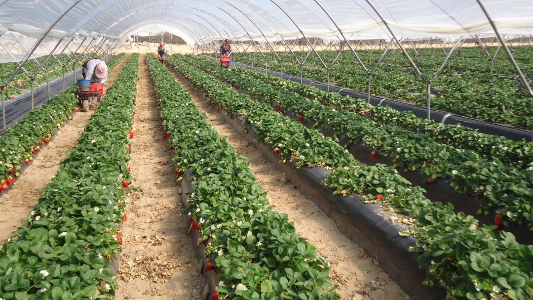 Llevarán cosechas para incrementar la economía de la zona norte de Jalisco