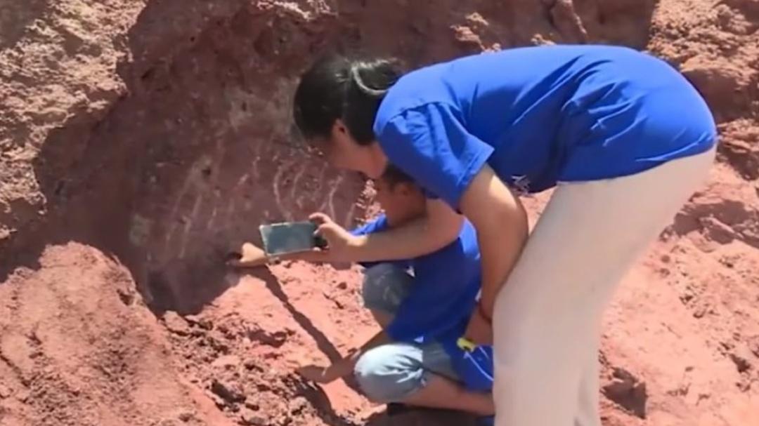 Niño descubre huevos de dinosaurio de hace 65 millones de años