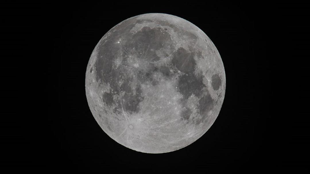 SOPITAS: Hay vida en la luna y se trata de decenas de pequeños tardígrados