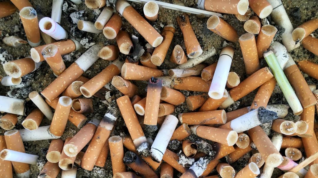 Por un mejor ambiente; recogen 27 mil colillas de cigarro en playa Miramar