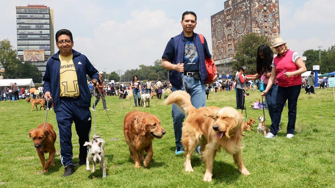 Se tendrán vacunas y esterilizaciones gratis para tu mascota en CU
