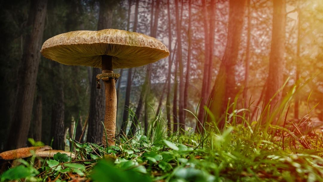Todo lo que no sabías de los hongos