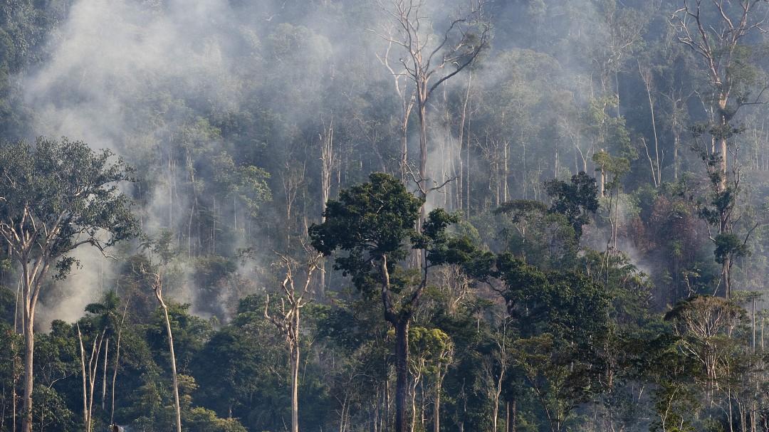 Fuego en el Amazonas; satélites de la NASA captan el arrasador incendio