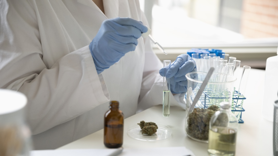 Legislación en Pro de la Cannabis
