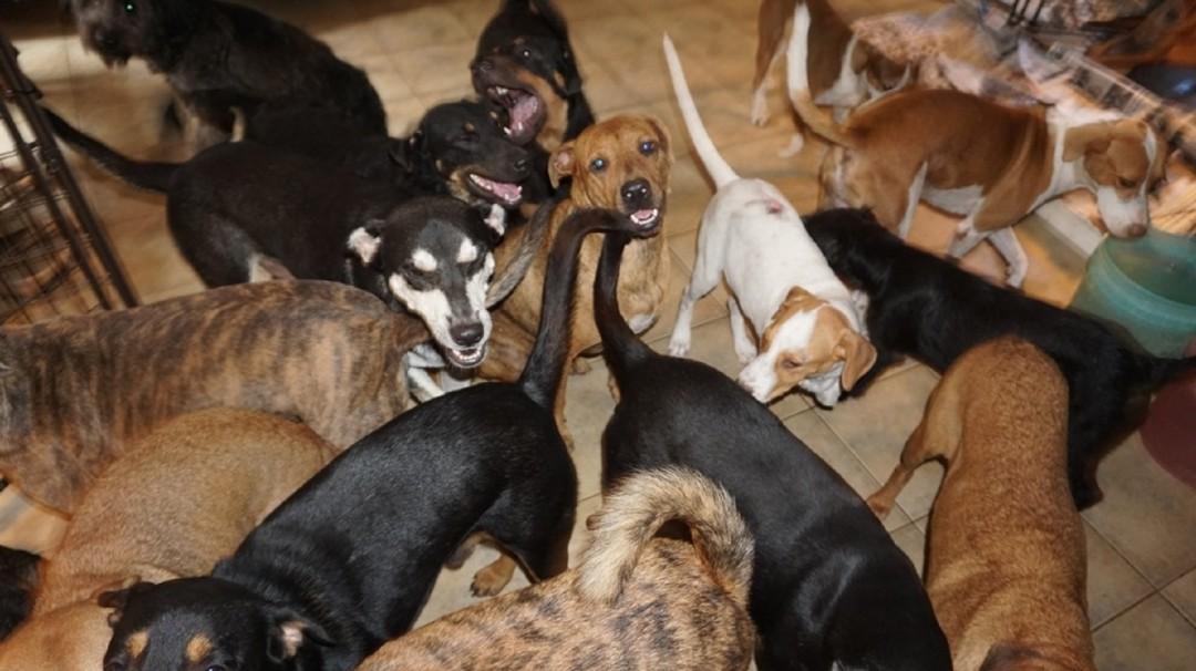 Mujer maravilla; salva a más de 100 perros callejeros del huracán Dorian