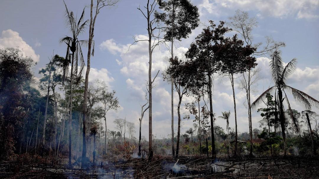 SOPITAS: Fake News de la Amazonía