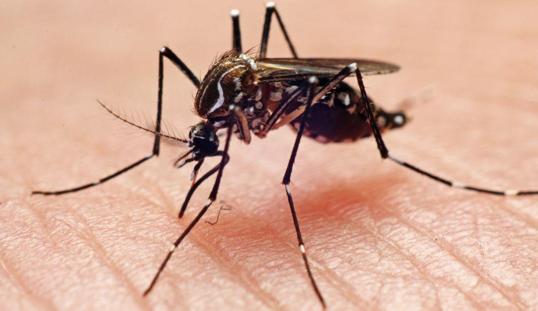 Jalisco, segundo lugar a nivel nacional en casos de dengue
