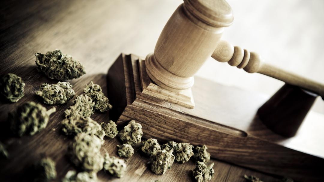 Zara Snapp nos habla del proceso legislativo de la marihuana en México