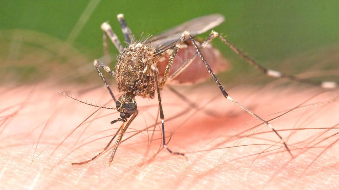 Prevalece saturación en clínicas por casos de dengue
