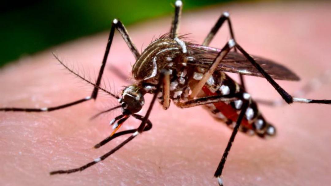 No hay registro de ausentismo por dengue entre los Industriales