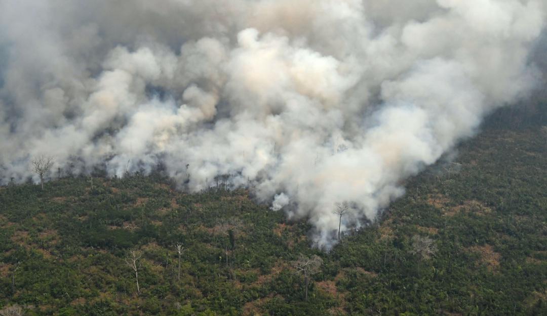 Incendios en Amazonas de Bolivia acaba con vida de 2.3 millones de animales