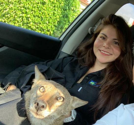 La joven relató que todas las acciones para salvar la vida de Pancho se realizan bajo la supresión de un médico veterinario