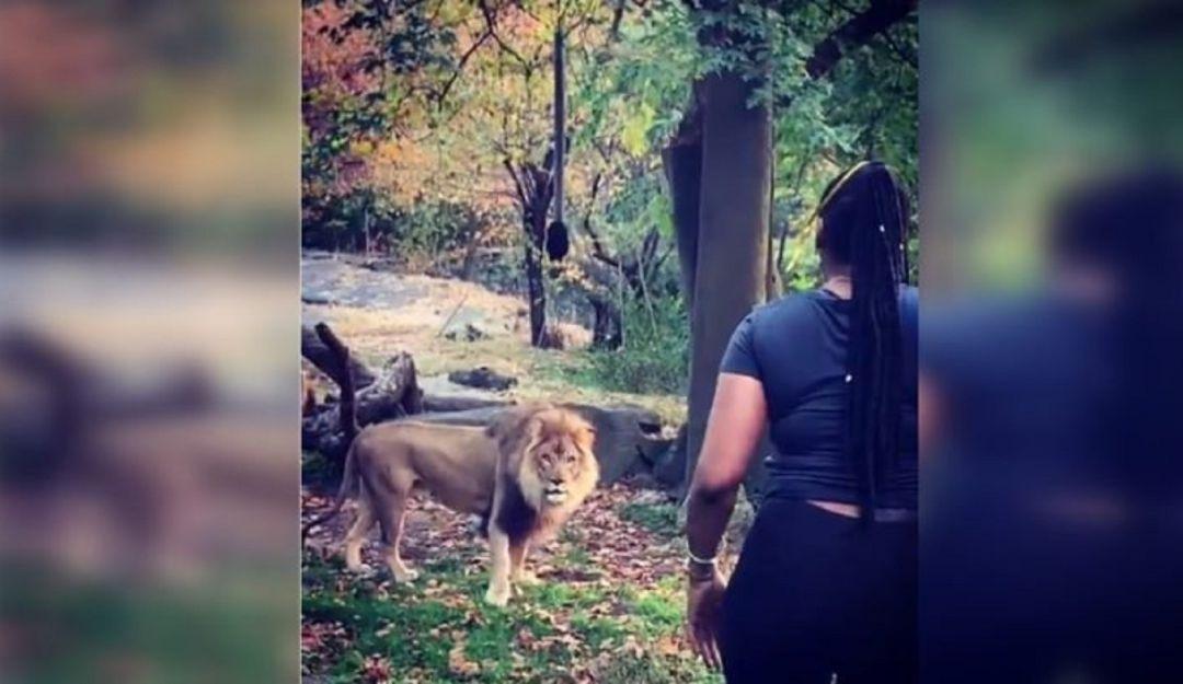Mujer burla seguridad y se mete a saludar a los leones