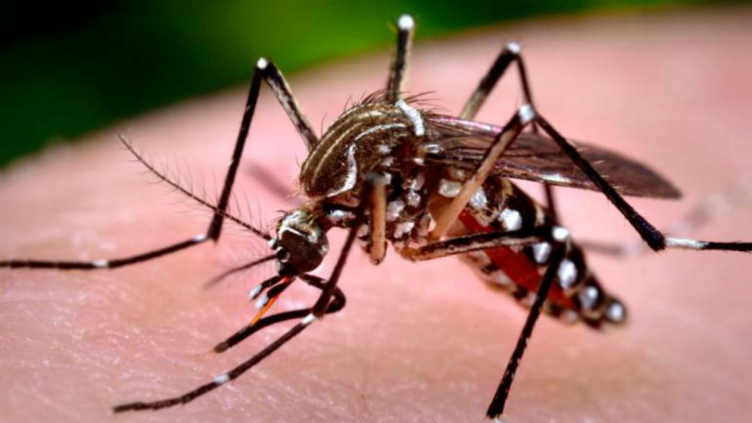 Ayuntamiento tapatío comprará nebulizadores para combatir el dengue