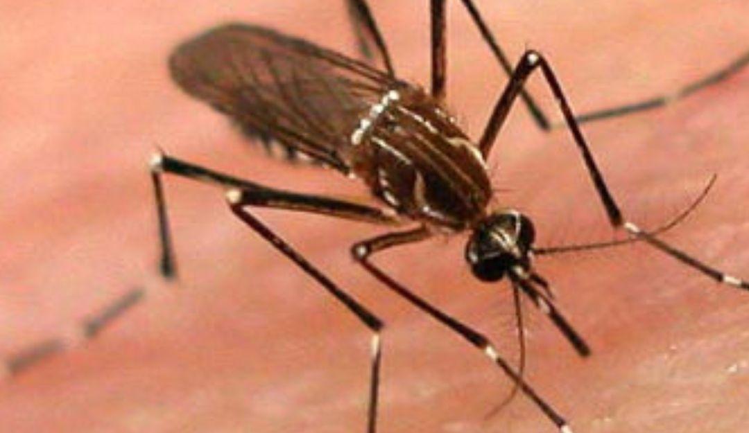 Entrevista sobre dengue, se esperan más casos en las próximas semanas