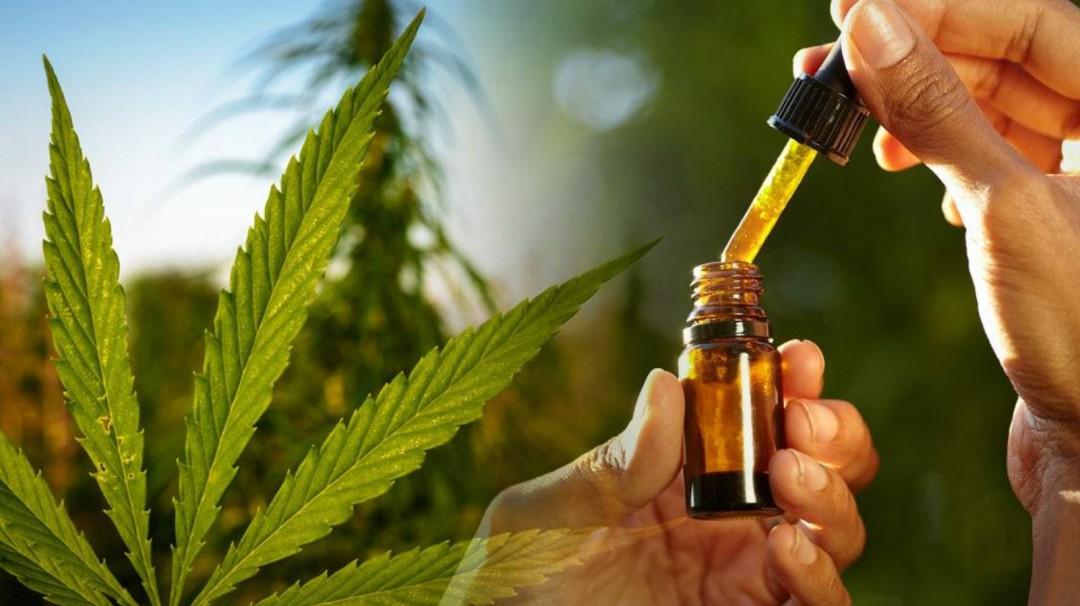 Cannabisalud espera que COFEPRIS regule uso de cannabis antes de abril