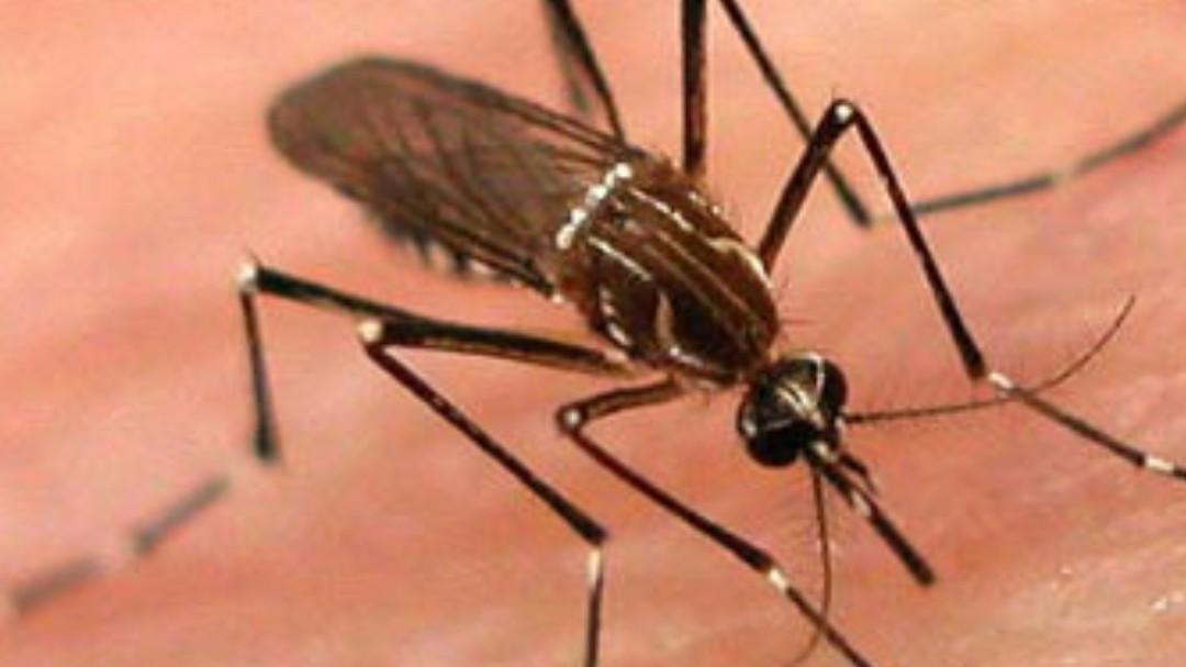 AMLO desconoce emergencia de dengue en Jalisco
