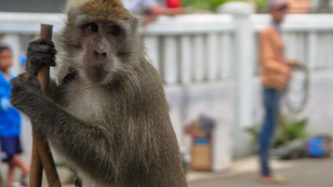 Captan supuesto maltrato animal en un laboratorio y animalistas denuncian