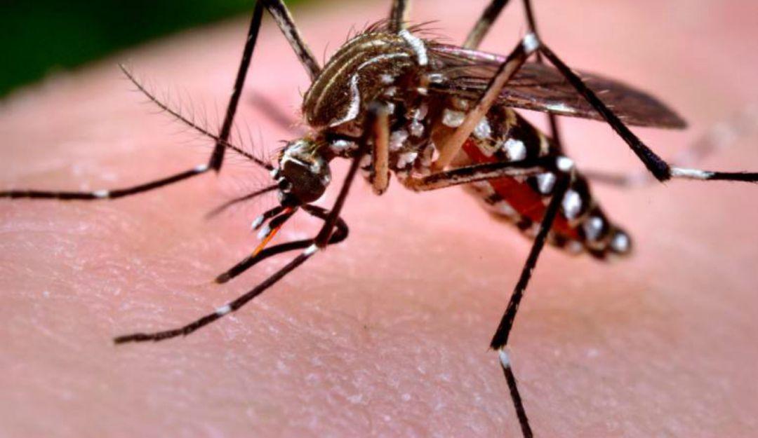 El 40% de personas con dengue están en la UdeG
