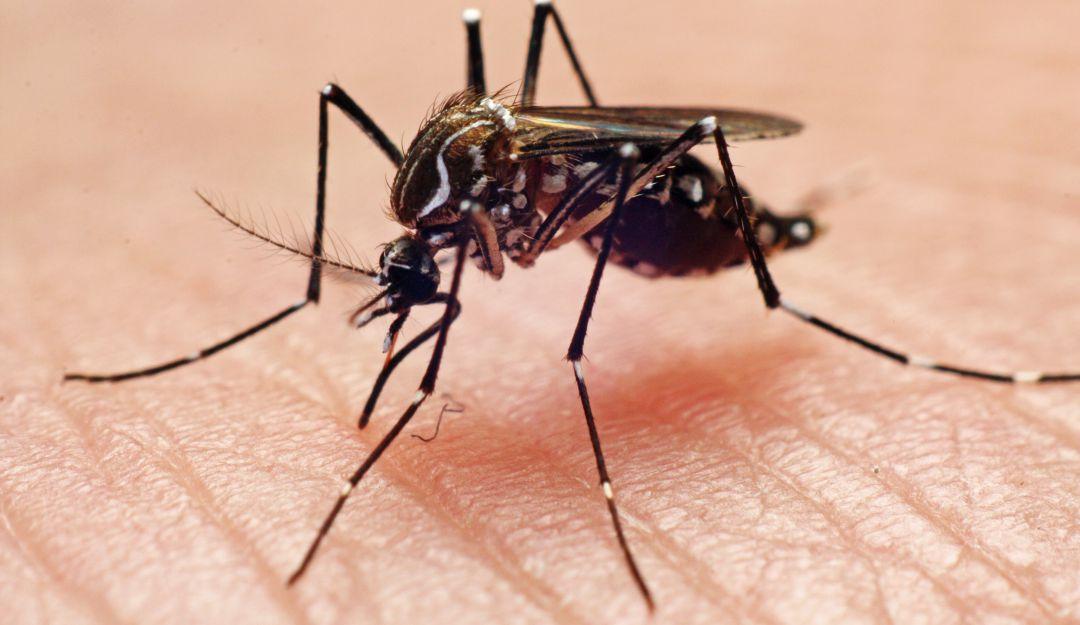 SEJ registra mil 500 casos de dengue en educación básica