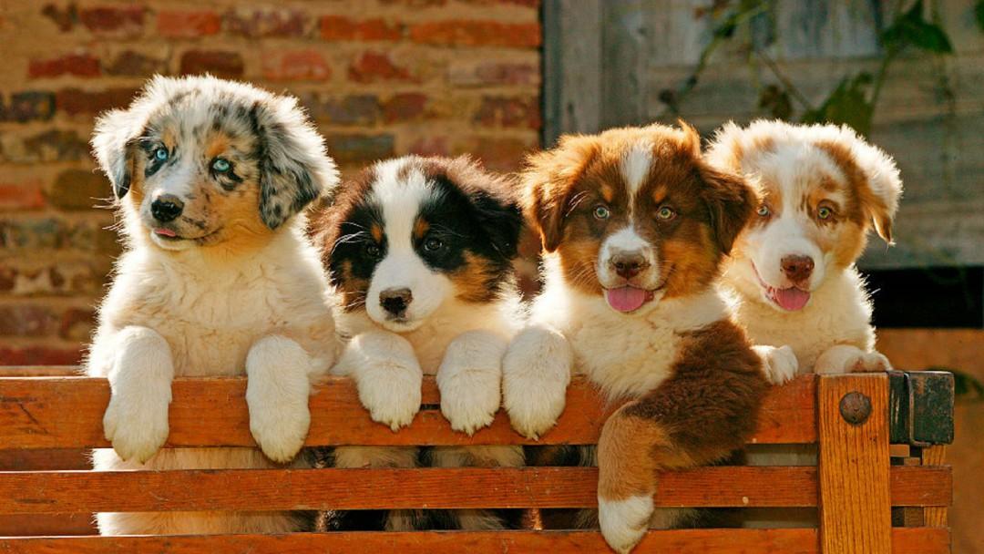 Las familias destinan entre 12 y 20% de su sueldo mensual a sus mascotas