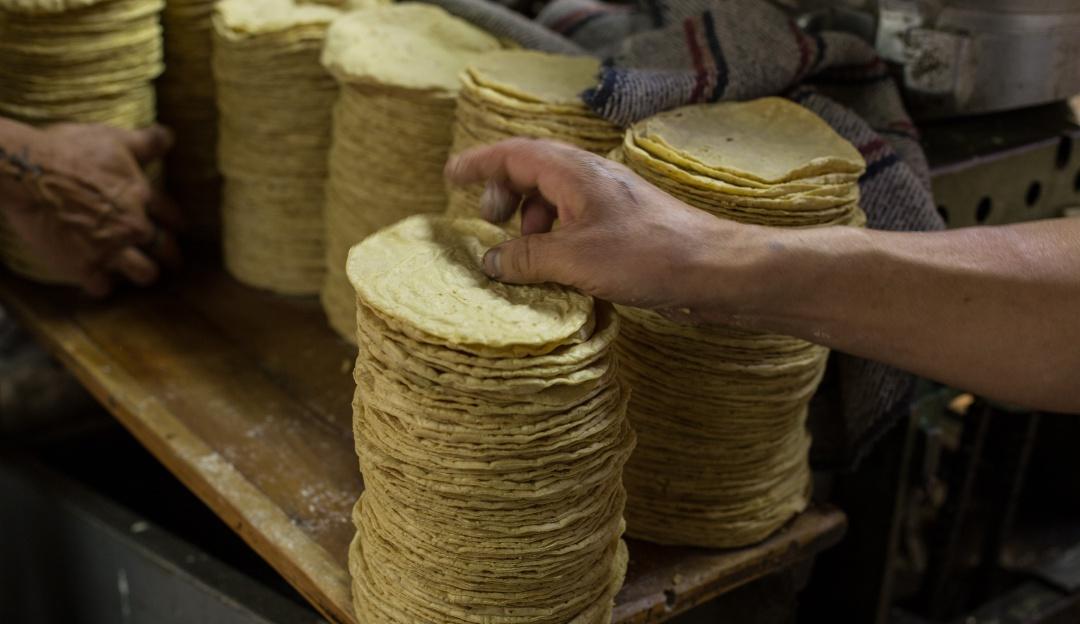 Prepárate; kilo de tortilla costaría hasta 60 pesos de aprobarse nueva ley