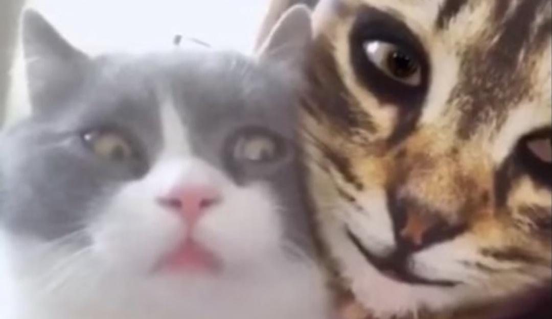 Gatitos caen en broma viral de sus dueñas y así reaccionan a filtro