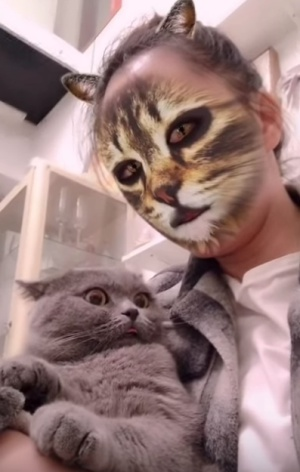 Las reacciones de los gatos le han dado la vuelta al mundo