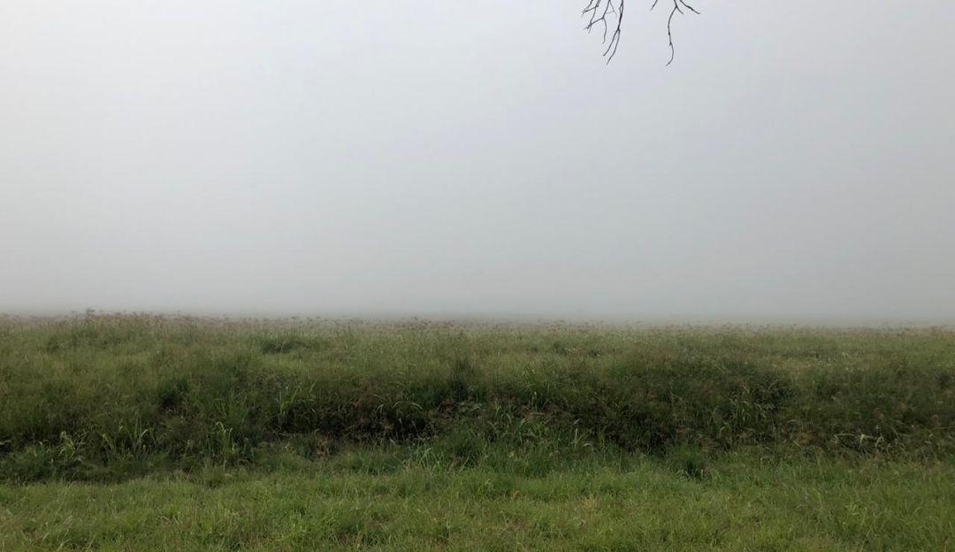 Neblina afectó 84 vuelos en el Aeropuerto de Guadalajara