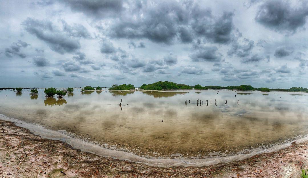 Arrasan con más de 2 mil metros de manglares en reserva ecológica