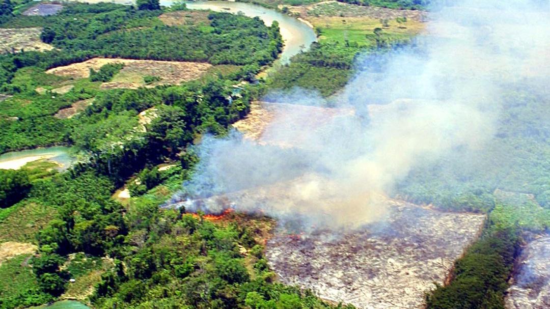 La Selva Lacandona lucha por sobrevivir a la deforestación