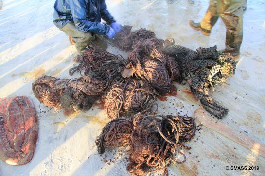 Encontraron casi 100 kilogramos de basura en su estómago