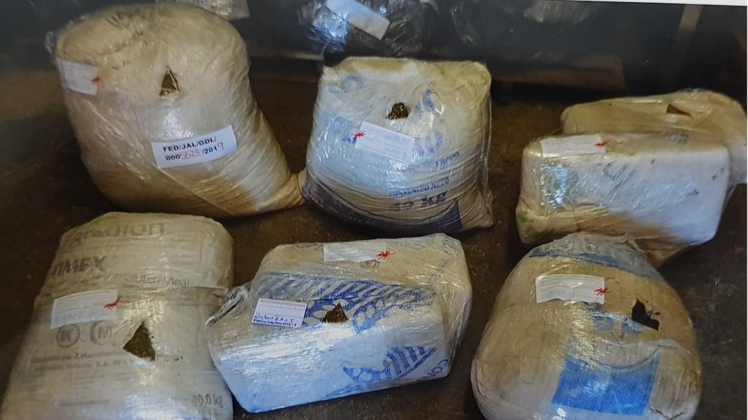 Aseguran más de 70 kilos de marihuana en Ahualulco de Mercado